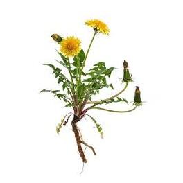 Tarassaco Estratto idroalcolico Larix - depurativo e drenante, 50 ml